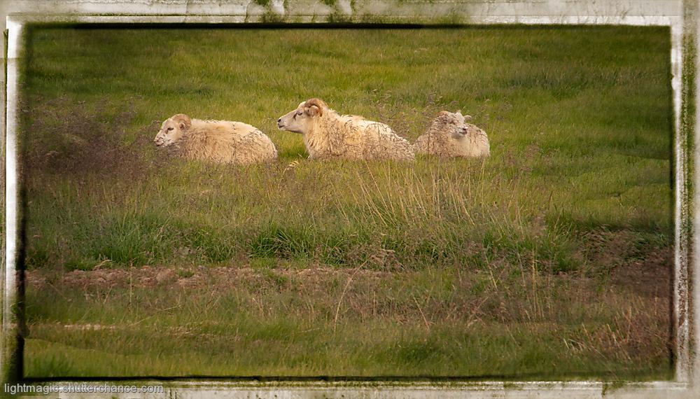 photoblog image Three in a Row
